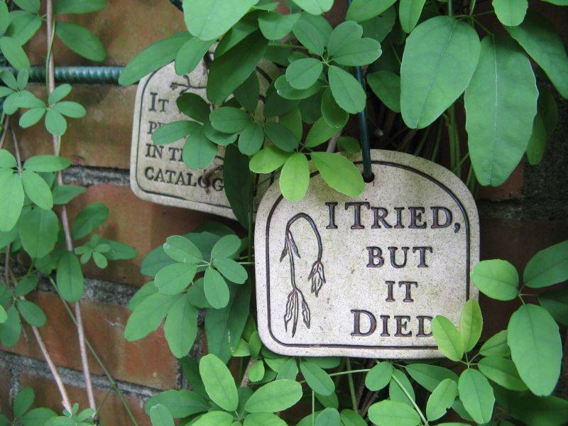 A sign hanging amidst vines says,